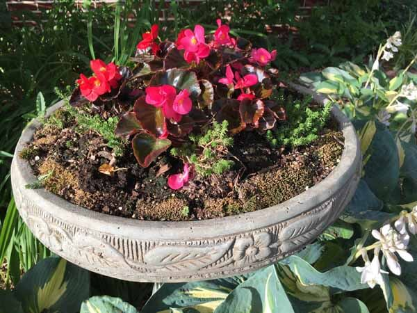 Bird Bath Planter - Closeup
