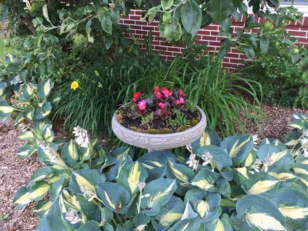 Bird Bath Planter - View 1