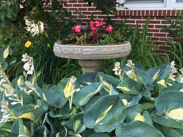 Bird Bath Planter - View 2