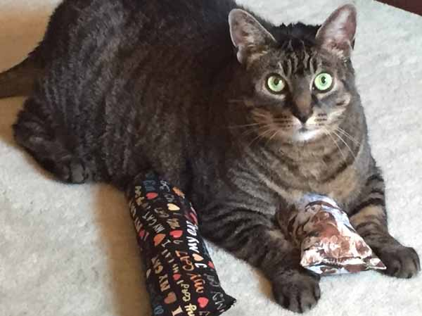 Homemade Cat Toys - Cat with Toys