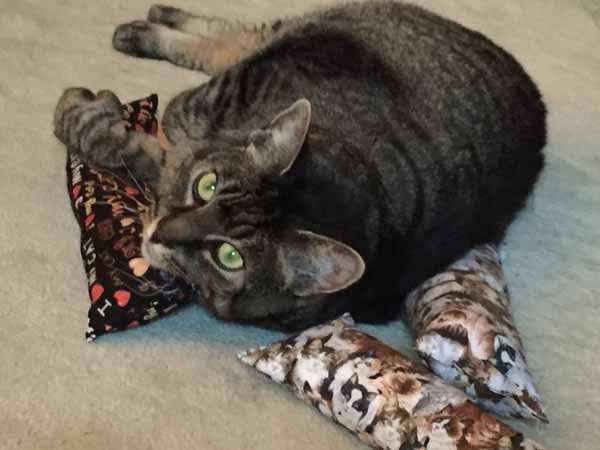 DIY Catnip Toys - Give to Cat