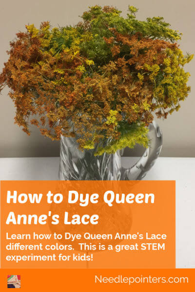 How to Dye Queen Anne's Lace - Pin