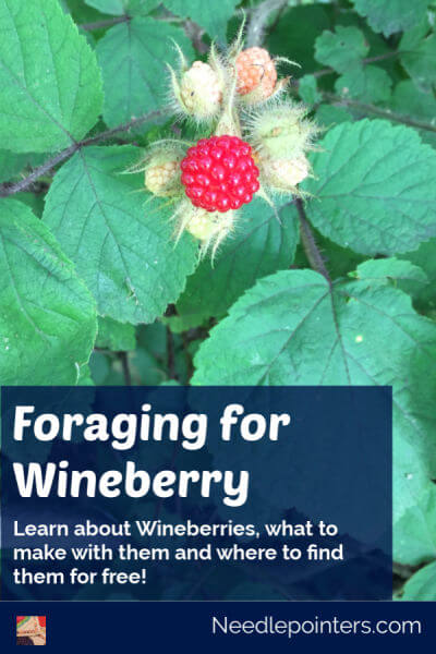 Foraging for Wineberry - Pin