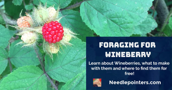 Foraging for Wineberry - Facebook Ad