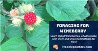 Wineberry Foraging