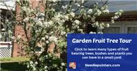 Fruit Trees, Bushes and Plants for a Small Yard