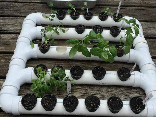 PVC Pipe Planter - Plants added