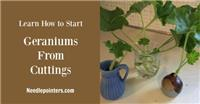 How to Propagate Geranium Plants
